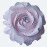 Rose in Gesso Profumate