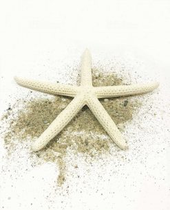 stella marina grande dettaglio