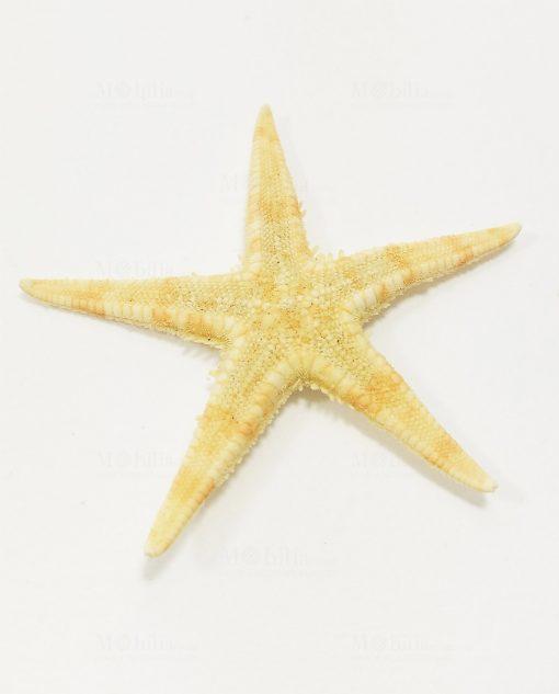 stella marina retro
