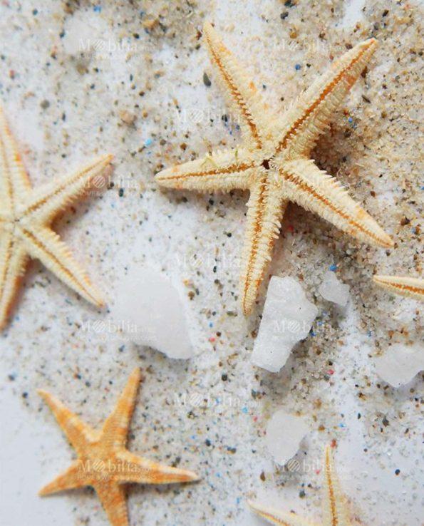 Stelle Marine Decorative per Bomboniere Naturali Abala Varie Misure