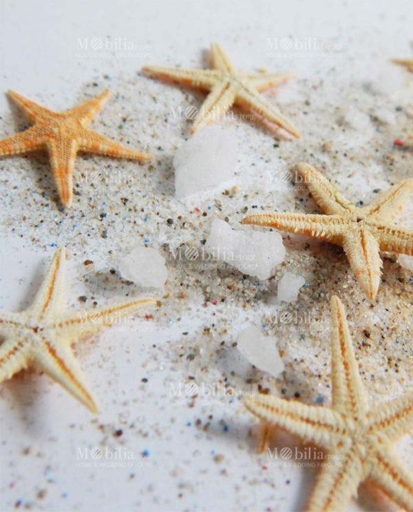 Bomboniere Applicazioni Stelle Marine Naturali