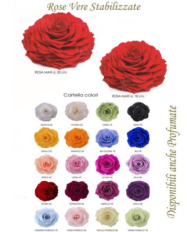 Rose Maxi Stabilizzate Vari Colori