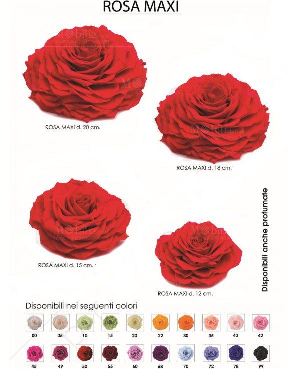 rose-stabilizzate-maxi-varie-misure