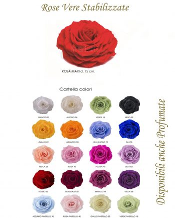 Rose Maxi 15 cm Stabilizzate Vari Colori