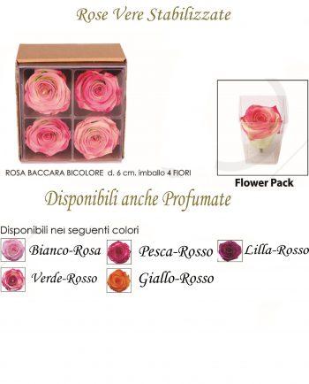 Rose Stabilizzate online Piccole Bicolore