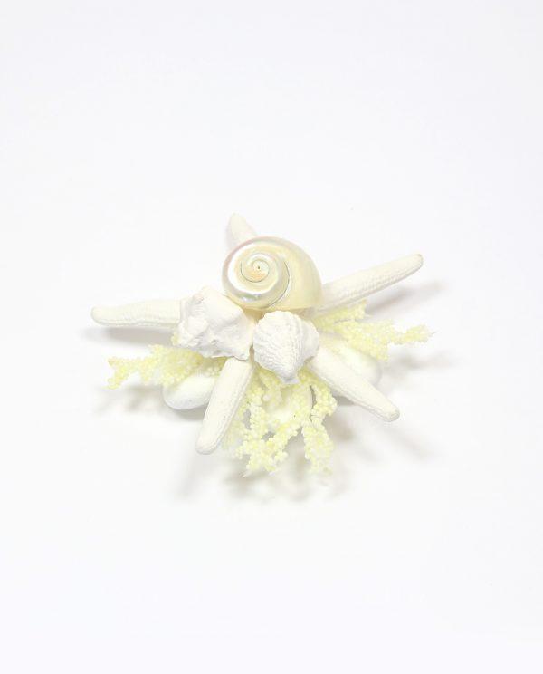 Segnaposto stella Marina Naturale con conchiglie e confetti rdm