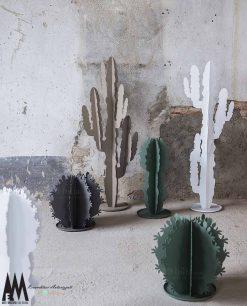 cactus ambientata