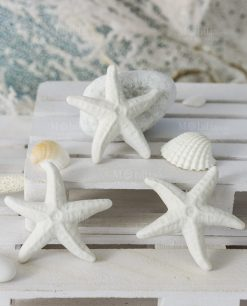 calamita stella marina bianca