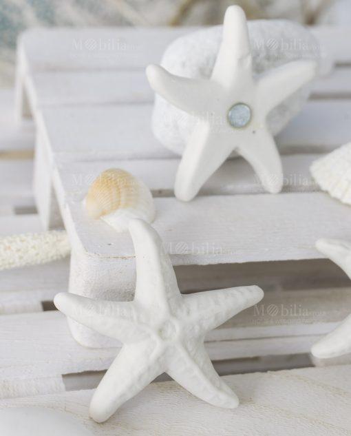 calamita stella marina bianca avanti e retro