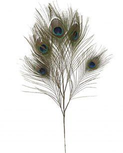 Piuma di pavone decorativa 1