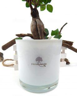 bomboniera boho chic bonsai con vaso in vetro bianco paola rolando