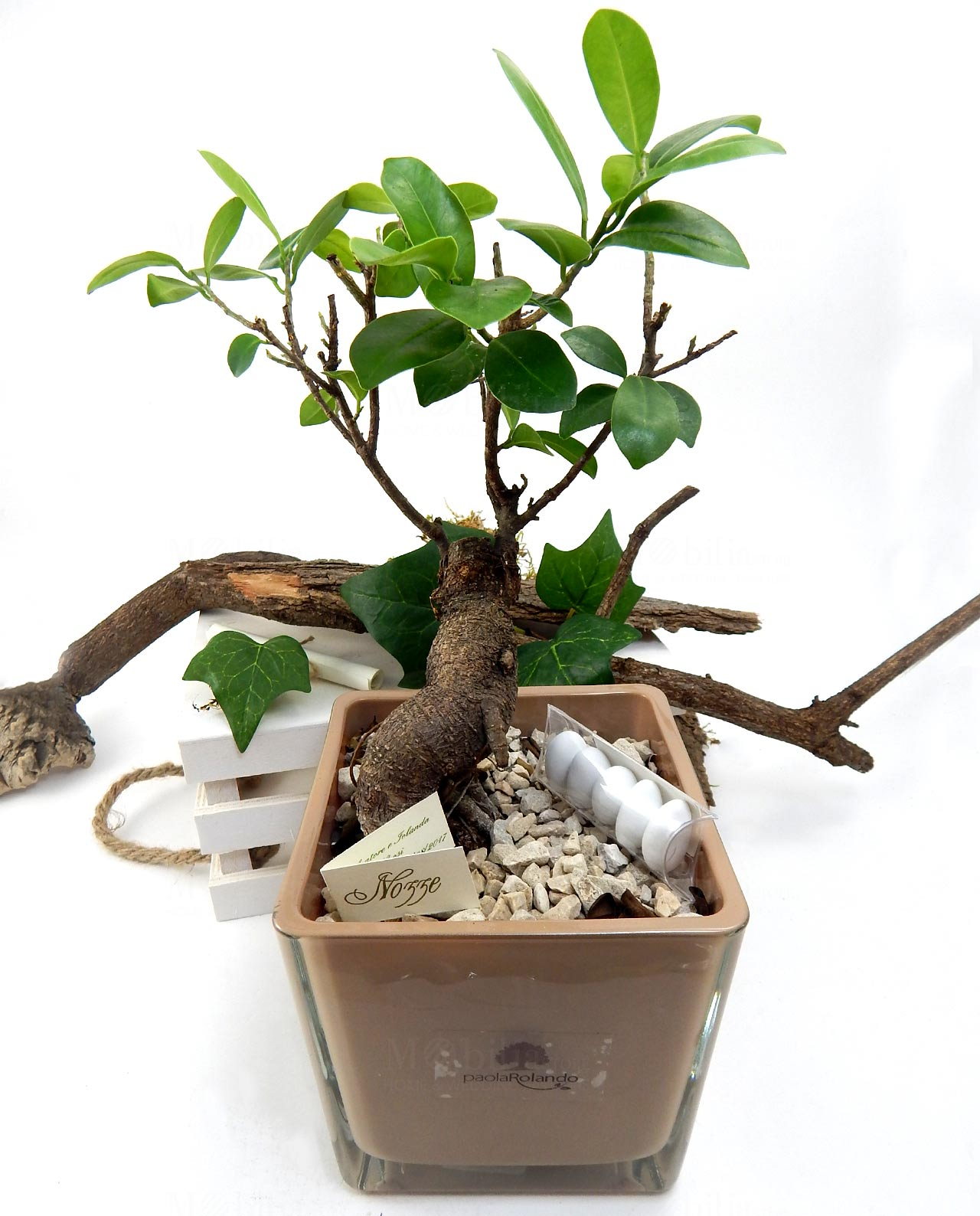bomboniera bonsai ginseng con vaso in vetro nocciola paola