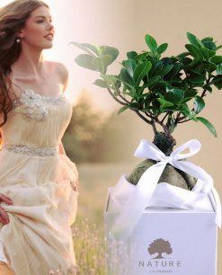 bomboniera bonsai vero con scatola paola rolando