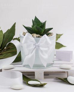 bomboniera pianta grassa con vaso cilindro bianco paola rolando fiocco bianco