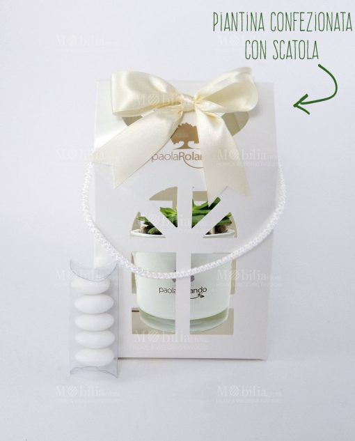 bomboniera pianta grassa vaso vetro con lanterna paola rolando con nastro