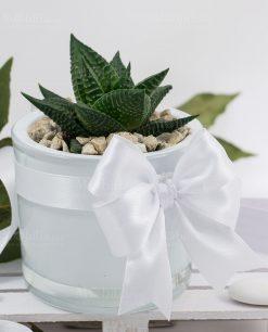 bomboniera vaso cilindro vetro bianco con pianta grassa succulenta paola rolando con fiocco bianco