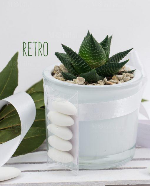 bomboniera vaso cilindro vetro bianco con pianta grassa succulenta paola rolando con tubicino