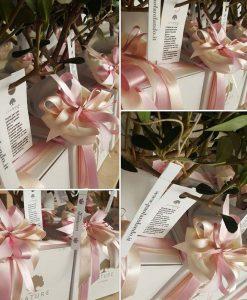 bomboniere bonsai confezionati in rosa paola rolando