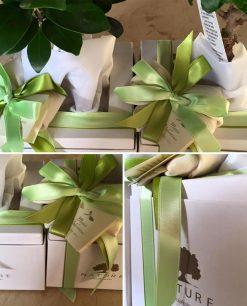 bomsoniere bonsai confezionate paola rolando