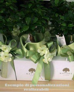 bonsai con confezione personalizzata paola rolando