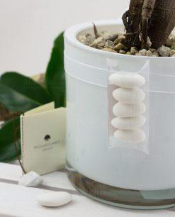 bonsai con vaso cilindrico vetro bianco paola rolando con tubicino e confetti