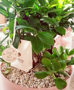 bonsai con vaso per bomboniere paola rolando