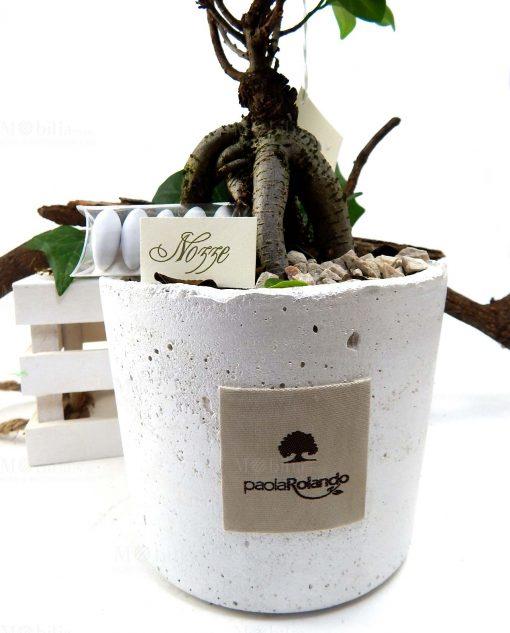 bonsai con vaso tondo per bomboniere matrimonio