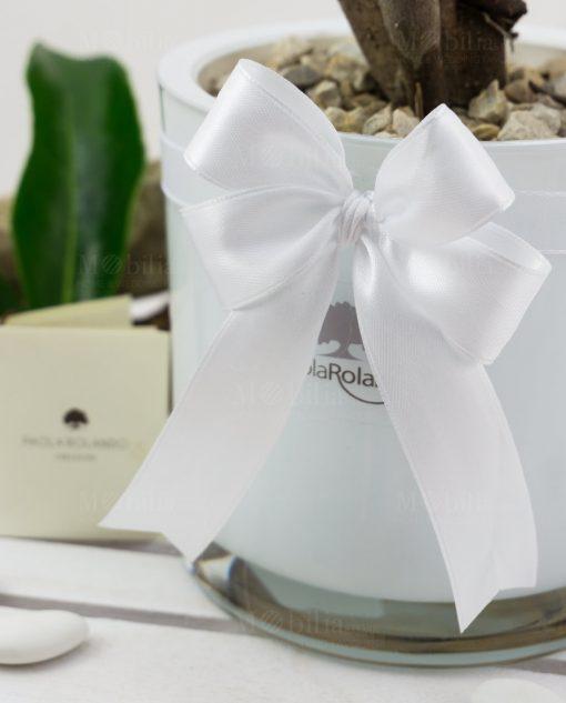 bonsai vaso vetro bianco cilindrico paola rolando con doppio fiocco bianco