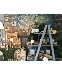 collezione green piantine bonsai e grasse paola rolando