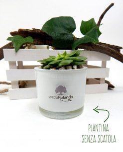pianta graso vaso rotondo bianco paola rolando