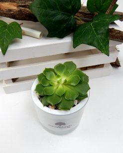 piantina succulente in vaso di vetro bianco paola rolando