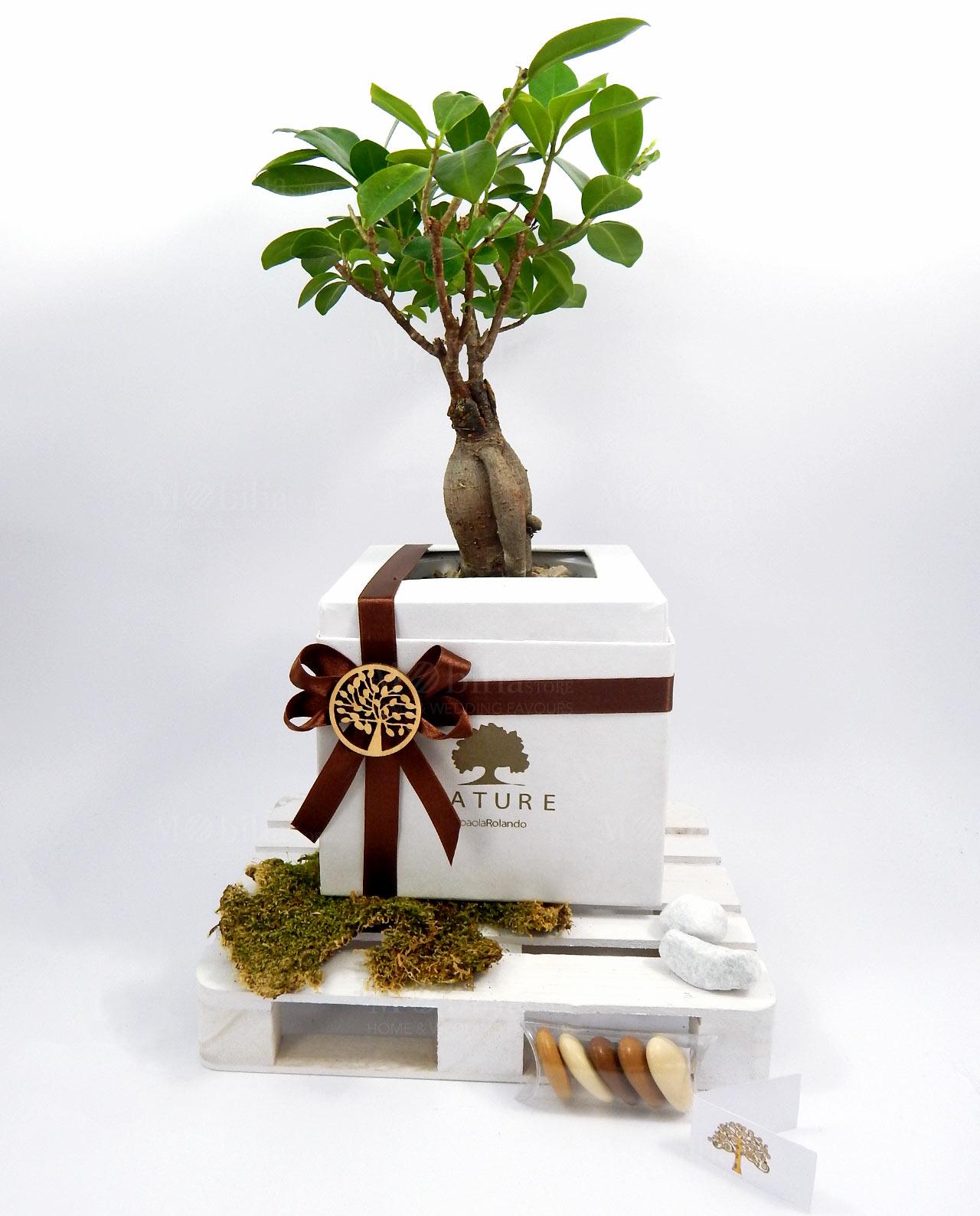 bomboniera boho chic bonsai ginseng paola rolando