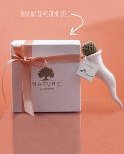 bomboniera cornetto con pianta grassa con scatola e nastro paola rolando