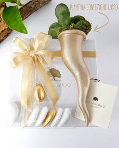 bomboniera cornetto con pianta grassa confezione lusso paola rolando