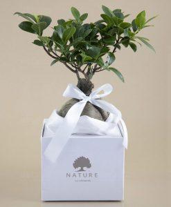 bomboniera green bonsai vivo paola rolando