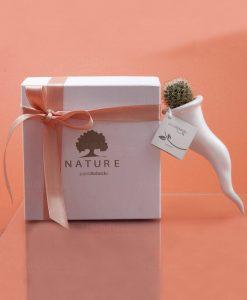 bomboniera green corno in ceramica bianca con piantina grassa paola rolando