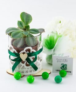 bomboniera legambiente piantina grassa con vaso vetro ricamo fiocco verde e applicazione cuore legno