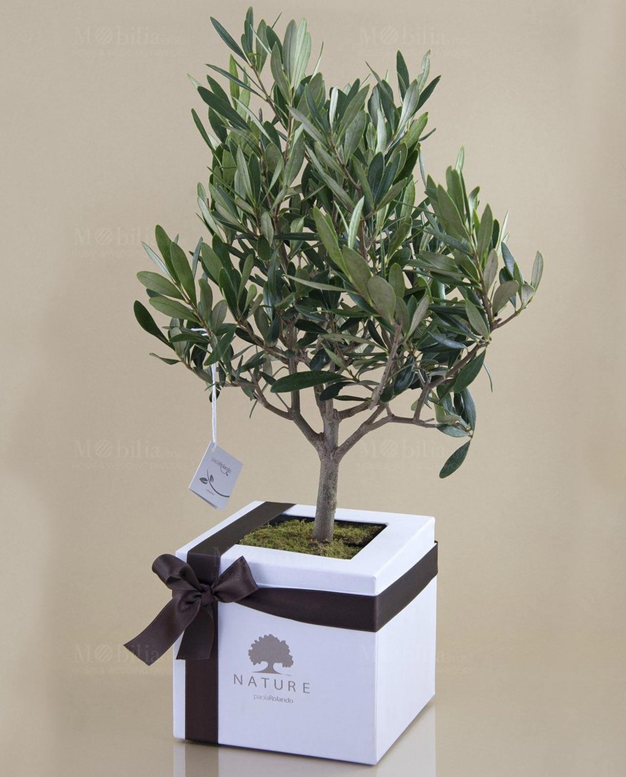 Bomboniera pianta di ulivo paola rolando mobilia store for Bonsai di ulivo