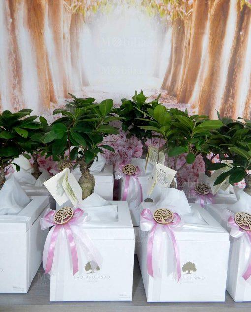 bomboniera piantina bonsai con fiocchi rosa paola rolando