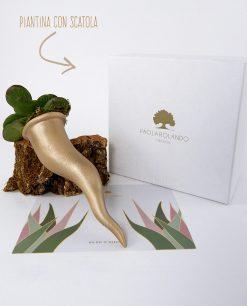cornetto con pianta grassa e scatola cartoncino bianco nature paola rolando