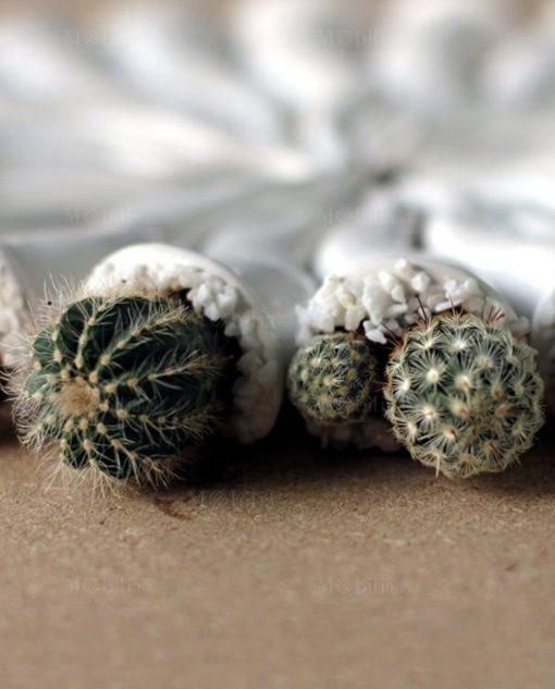 cornetto in ceramica bianca con pianta grassa paola rolando