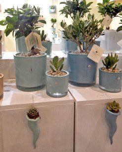 piante con vaso acqua e menta ulivo bonsai e cornetto paola rolando