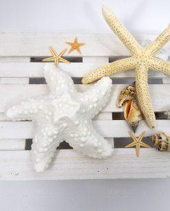 stella marina ceramica lampada
