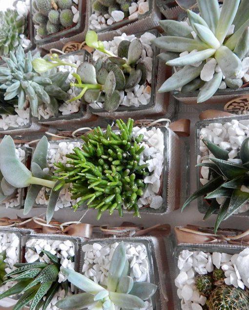 vasetti piante grasse bomboniere
