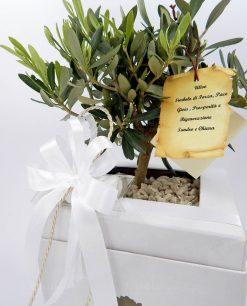 bomboniera green bonsai ulivo con vaso paola rolando