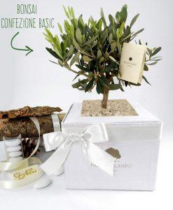 bomboniera bonsai ulivo con scatola paola rolando con nastro bianco