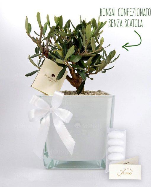 bomboniera olivo con vaso vetro bianco paola rolando con fiocco e confetti