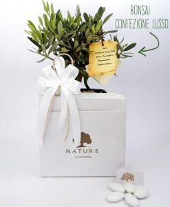 bomboniera ulivo confezionato con scatola paola rolando nastri bianchi e pergamena