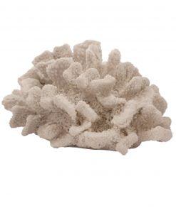 corallo spugna