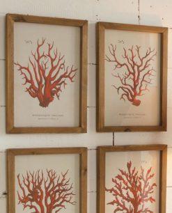 stampe con coralli e cornice in legno